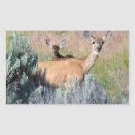 Mule Deer, A Doe and fawn Rectangular Stickers