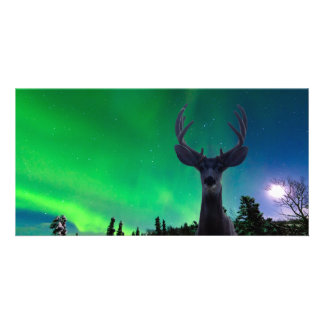 Mule deer and Aurora borealis Personalized Photo Card