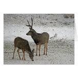 Mule deer buck and doe greeting cards