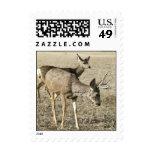 Mule Deer Buck and Doe Postage