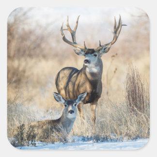 Mule Deer Buck and Doe Square Sticker