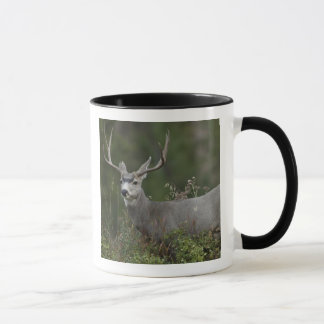 Mule Deer buck browsing in brush Mug