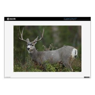 """Mule Deer buck browsing in brush 15"""" Laptop Decal"""