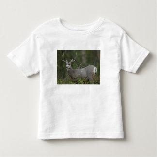 Mule Deer buck browsing in brush Toddler T-shirt