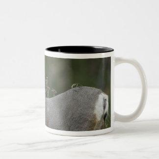 Mule Deer buck browsing in brush Two-Tone Coffee Mug