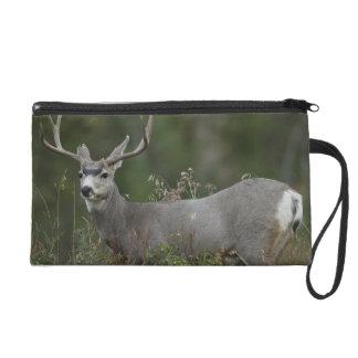 Mule Deer buck browsing in brush Wristlet