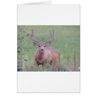 Mule Deer Buck Card
