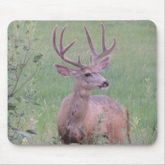 Mule Deer Buck Mouse Pad