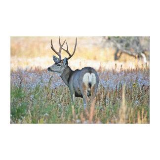Mule deer buck (Odocoileus hemionus) Canvas Print