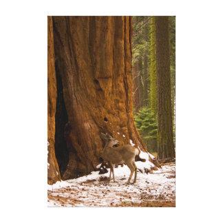 Mule Deer Stretched Canvas Prints
