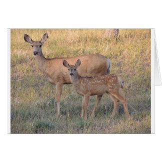 Mule Deer Doe and Fawn Card