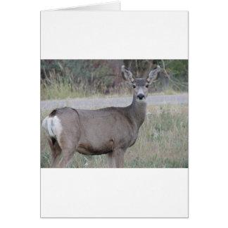 Mule Deer Doe Card
