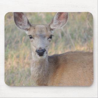 Mule Deer Doe Mouse Pad