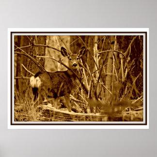 Mule Deer: Doe Poster
