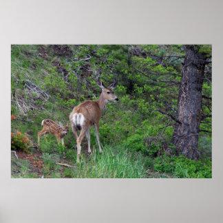 Mule Deer Doe with Fawn 1 Poster