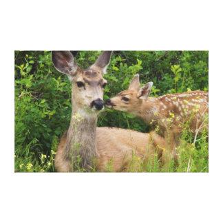 Mule Deer Doe with Fawn 2 Canvas Print
