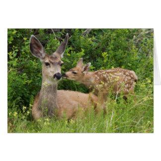 Mule Deer Doe with Fawn 2 Card