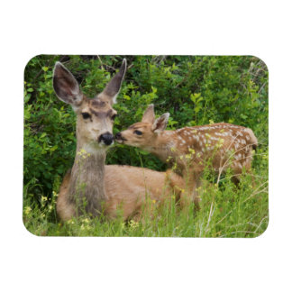 Mule Deer Doe with Fawn 2 Magnet