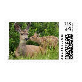 Mule Deer Doe with Fawn 2 Postage