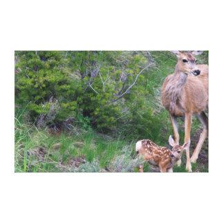 Mule Deer Doe with Fawn 3 Canvas Print