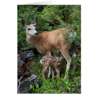 Mule Deer Doe with New Born Fawn Card