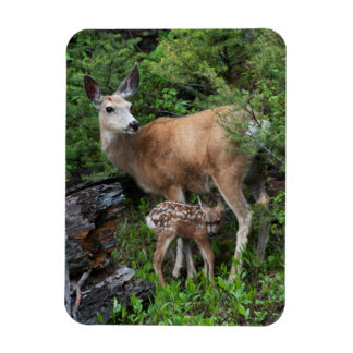Mule Deer Doe with New Born Fawn Magnet
