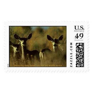 Mule Deer Herd Postage Stamp