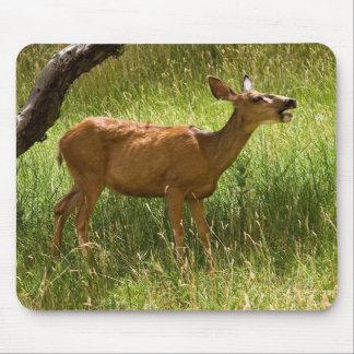 Mule Deer In Apple Orchard Mouse Pad