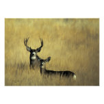 Mule Deer in Brush Print