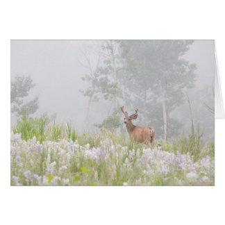 Mule Deer in Foggy Meadow Card