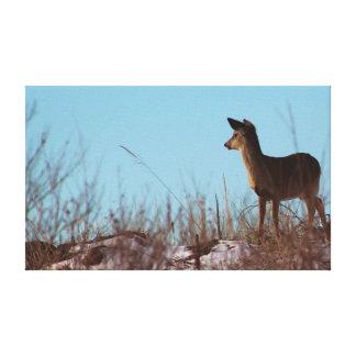 Mule Deer in Morning Sun Gallery Wrap Canvas