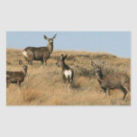 Mule Deer in South Dakota Rectangle Stickers