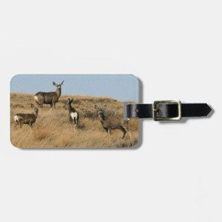 Mule Deer in South Dakota Tag For Luggage