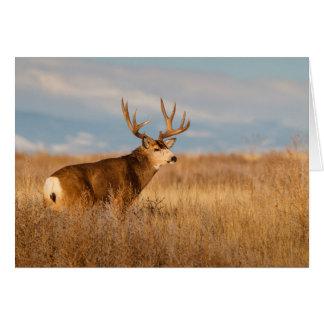 Mule Deer in Winter Grassland Card
