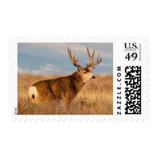 Mule Deer in Winter Grassland Postage