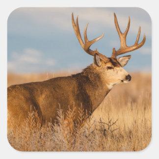 Mule Deer in Winter Grassland Square Sticker