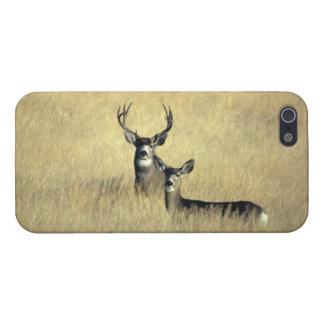 Mule Deer iPhone 5 Cover - Savvy