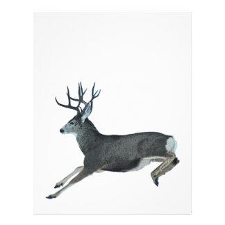 Mule deer motion letterhead