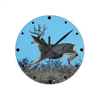 Mule deer motion round clock