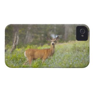 Mule Deer (Odocoileus hemionus) in meadow Case-Mate iPhone 4 Cases