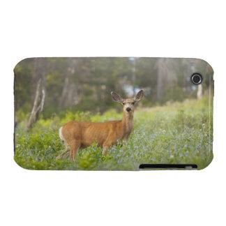 Mule Deer (Odocoileus hemionus) in meadow Case-Mate iPhone 3 Case