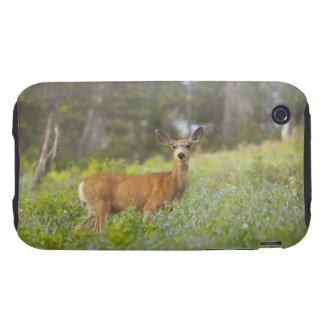 Mule Deer (Odocoileus hemionus) in meadow iPhone 3 Tough Case