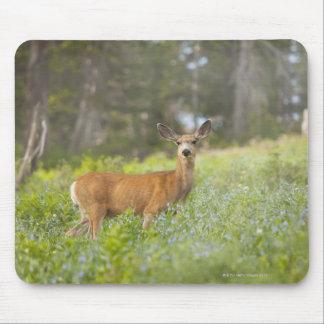 Mule Deer (Odocoileus hemionus) in meadow Mouse Pad
