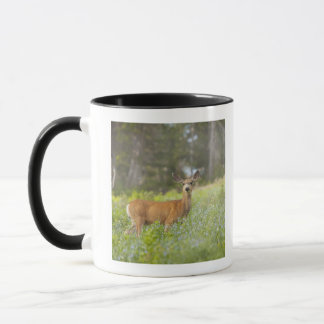 Mule Deer (Odocoileus hemionus) in meadow Mug