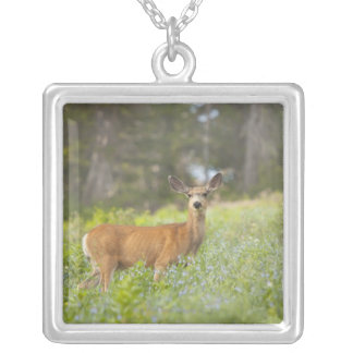 Mule Deer (Odocoileus hemionus) in meadow Silver Plated Necklace
