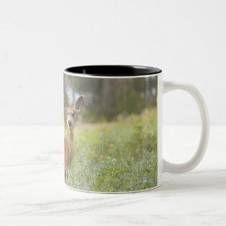 Mule Deer (Odocoileus hemionus) in meadow Two-Tone Coffee Mug