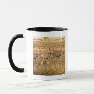 Mule deer (Odocoileus hemionus) One on left with Mug