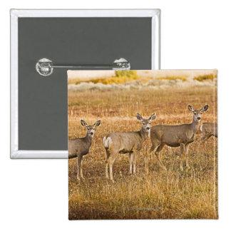 Mule deer (Odocoileus hemionus) One on left with Pinback Button