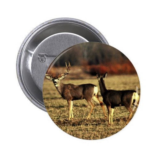 Mule Deer Pin