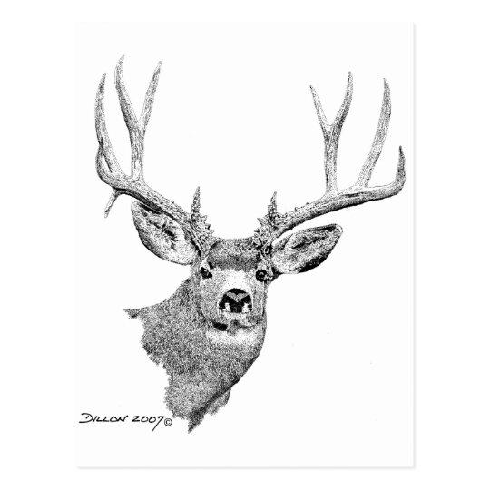 Mule Deer Postcard